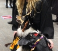 Shannon Smith, fine arts, poses with Shadow, Shannon's dog, for a photo before the Commencement Ceremony in the MPEC, Dec. 12. Shadow is an Australian Shepard service dog being trained to help people with Post-Traumatic Stress Disorder. Photo by Rachel Johnson