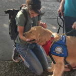 Furry friend comforts in time of need