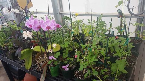 Biology honor society to hold plant sale April 21-22