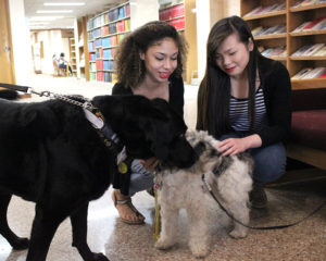 Therapy dogs will be in Moffett Library the week of final exams as they were in the spring of 2015. Photo by Francisco Martinez.
