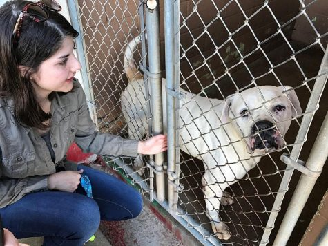 Pit bulls 'a reflection of their environment'