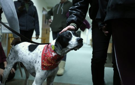 Therapy dogs visit library to comfort students