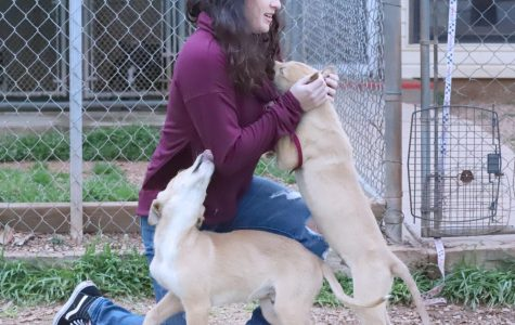 Students volunteer at the Humane Society to relieve stress