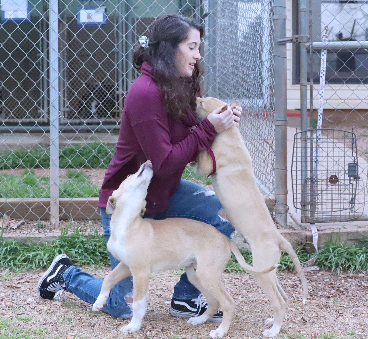 Camille Blanton, special education sophomore, plays with two dogs at the Wichita County Humane Society. Photo by Brianne Fournier