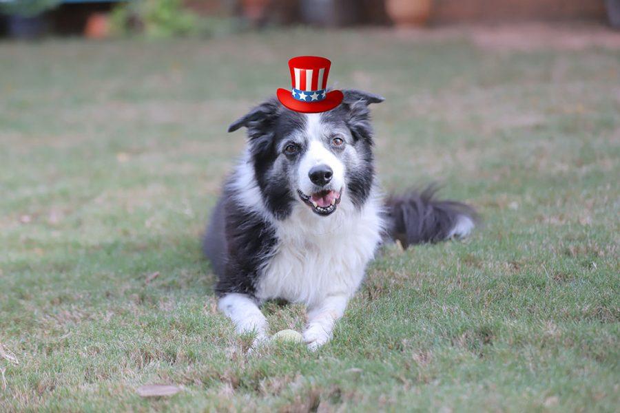 Dog in Uncle Sam hat