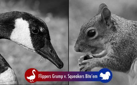 Goose vs Squirrel